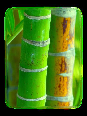 Découvrez tous les avantages du bambou, le matériau principal de cette table à manger moderne