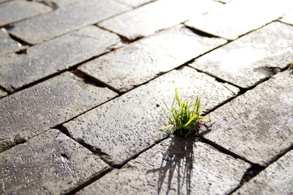 Urban Design Meubels.Unieke Meubels Gemaakt Van Duurzame Materialen Urban Design Fox